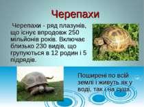 Черепахи - ряд плазунів, що існує впродовж 250 мільйонів років. Включає близь...