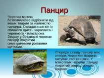 Черепах можна безпомилково відрізнити від інших тварин за наявністю панцира. ...