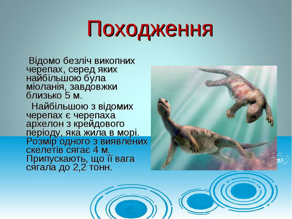 Відомо безліч викопних черепах, серед яких найбільшою була міоланія, завдовжк...