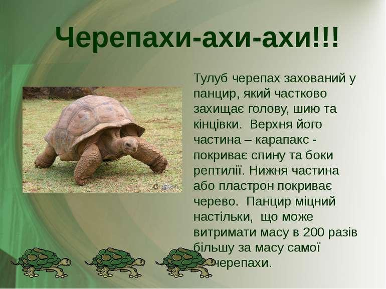 Тулуб черепах захований у панцир, який частково захищає голову, шию та кінців...