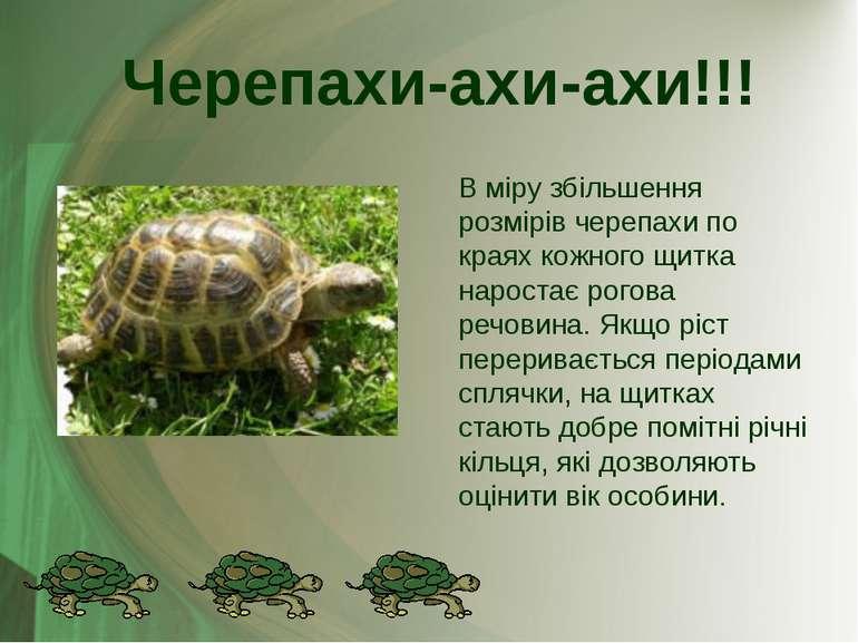В міру збільшення розмірів черепахи по краях кожного щитка наростає рогова ре...