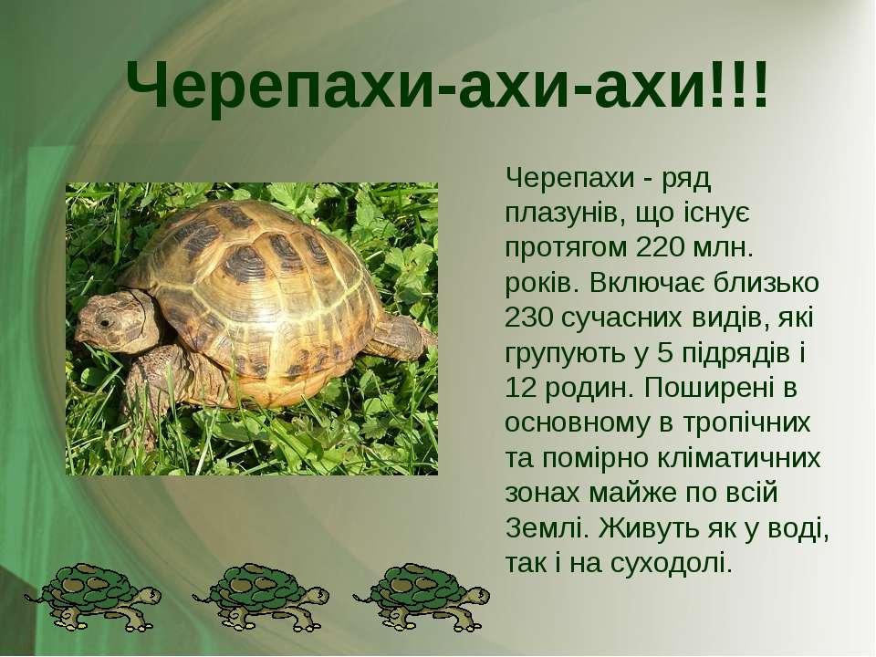 Черепахи - ряд плазунів, що існує протягом 220 млн. років. Включає близько 23...