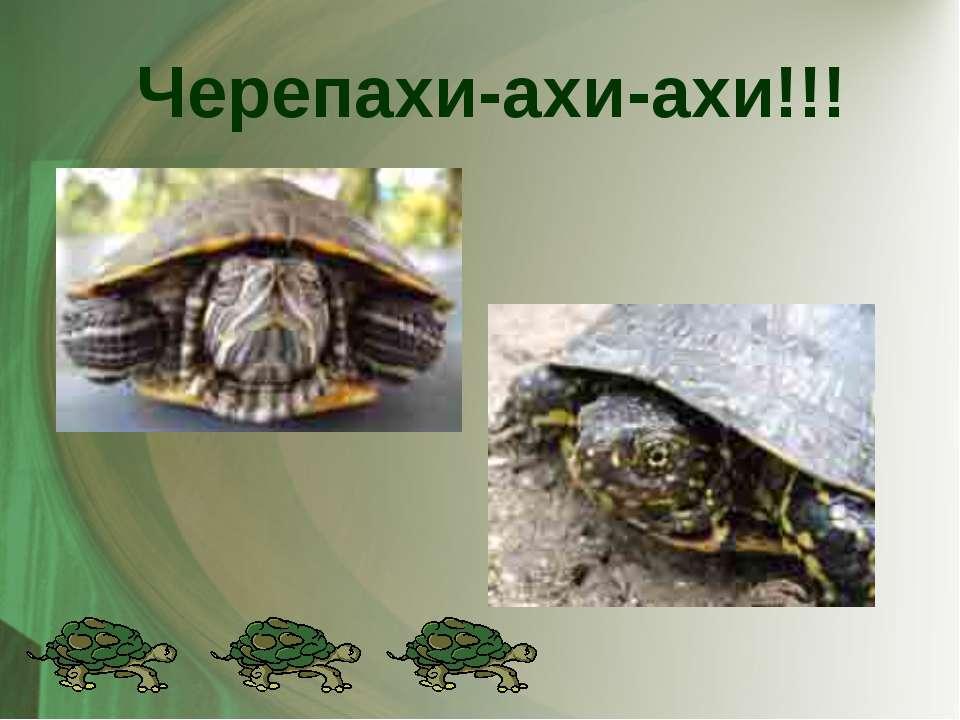 Черепахи-ахи-ахи!!!