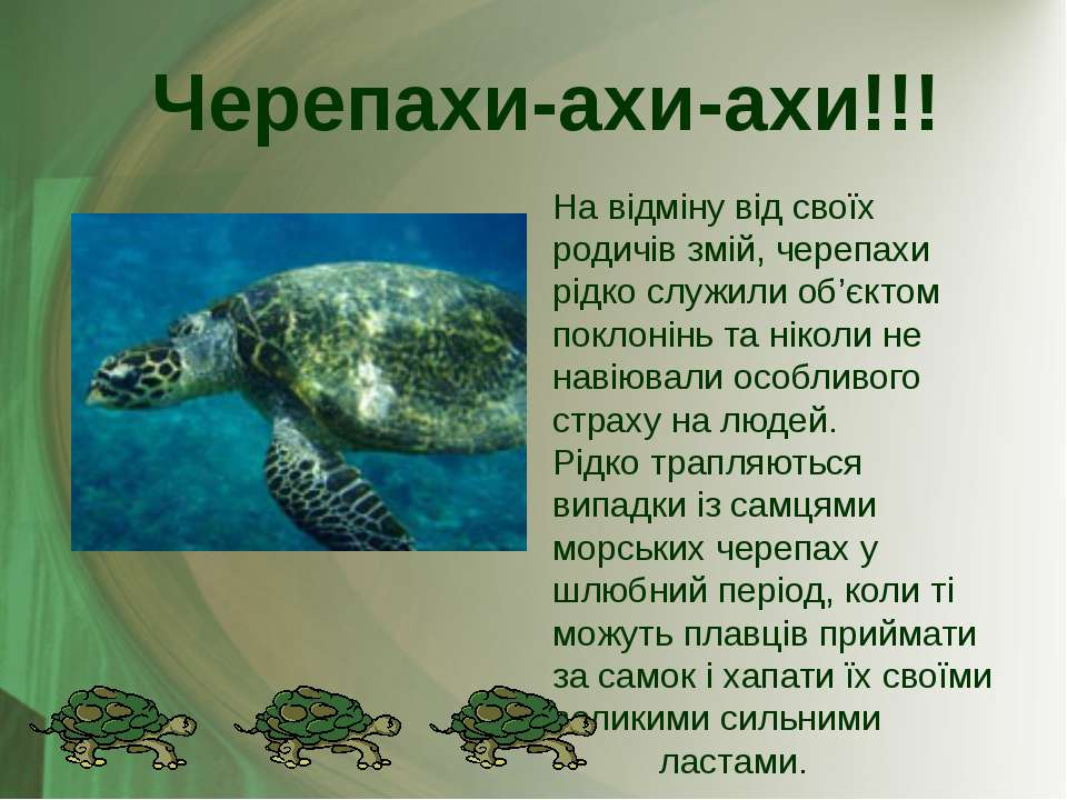 На відміну від своїх родичів змій, черепахи рідко служили об'єктом поклонінь ...