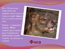 На о. Мадагаскар збереглися такі тварини, яких немає не тільки в самій Африці...