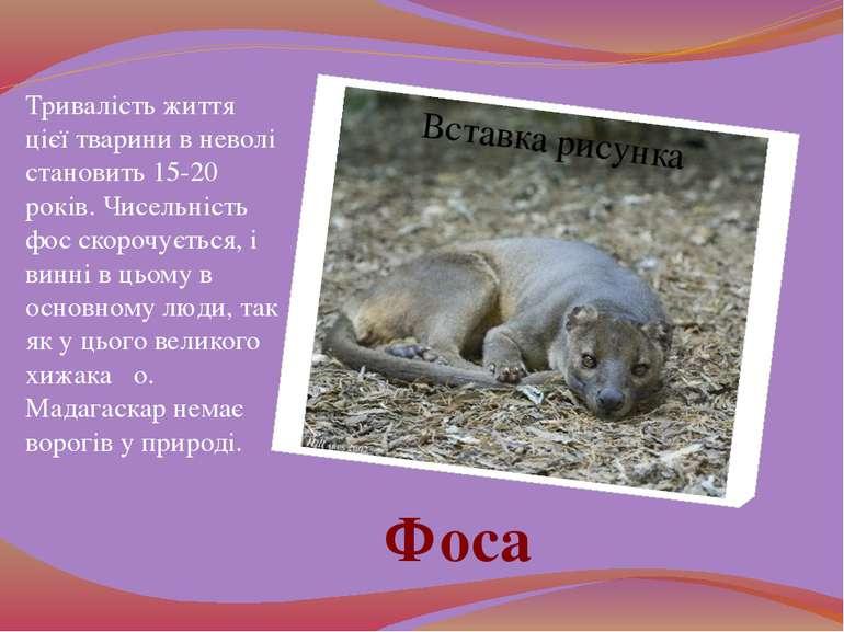 Тривалість життя цієї тварини в неволі становить 15-20 років. Чисельність фос...