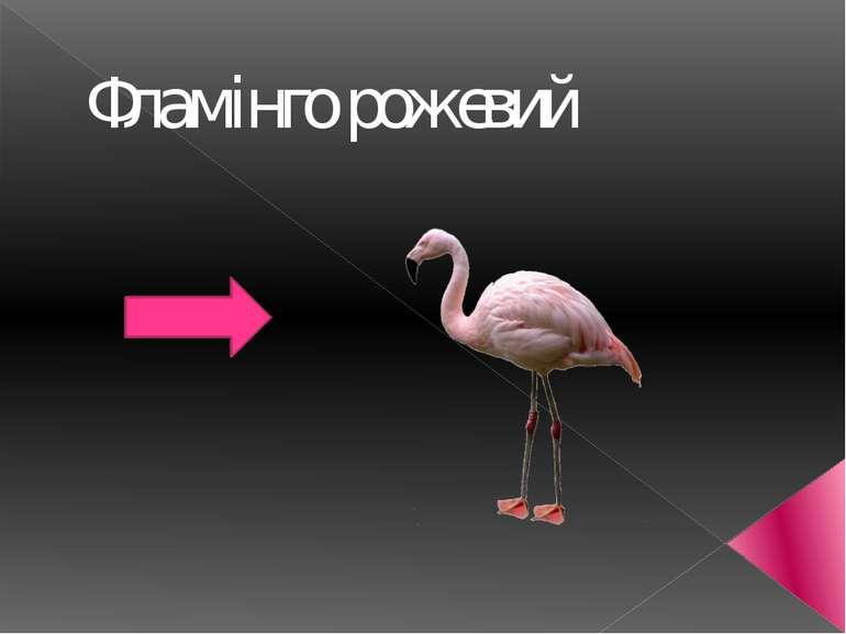 Фламінго рожевий