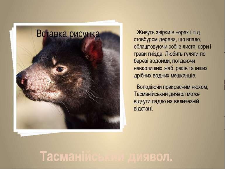 Живуть звірки в норах і під стовбуром дерева, що впало, облаштовуючи собі з л...