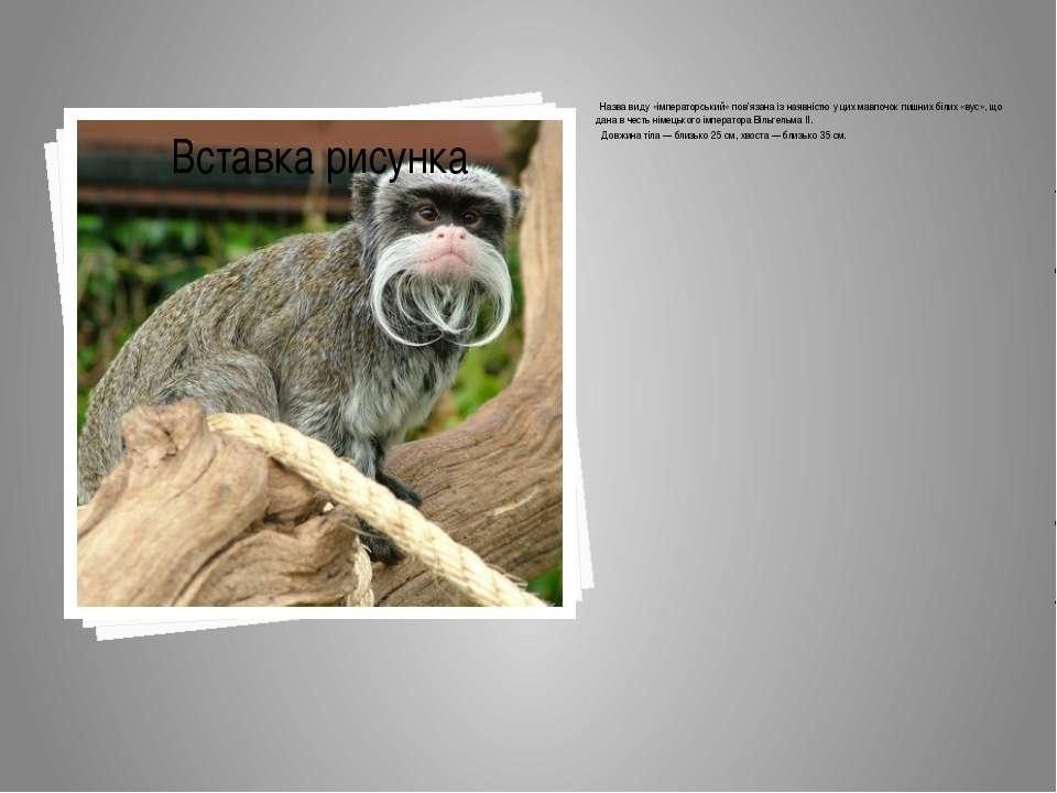 Назва виду «імператорський» пов'язана із наявністю у цих мавпочок пишних біли...