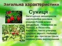 Суниця — багаторічна низькоросла світлолюбна рослина родини Розові класу Двод...