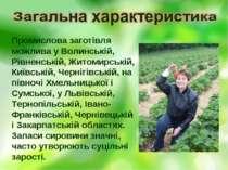 Промислова заготівля можлива у Волинській, Рівненській, Житомирській, Київськ...