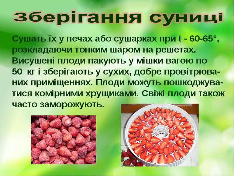Сушать їх у печах або сушарках при t - 60-65°, розкладаючи тонким шаром на ре...