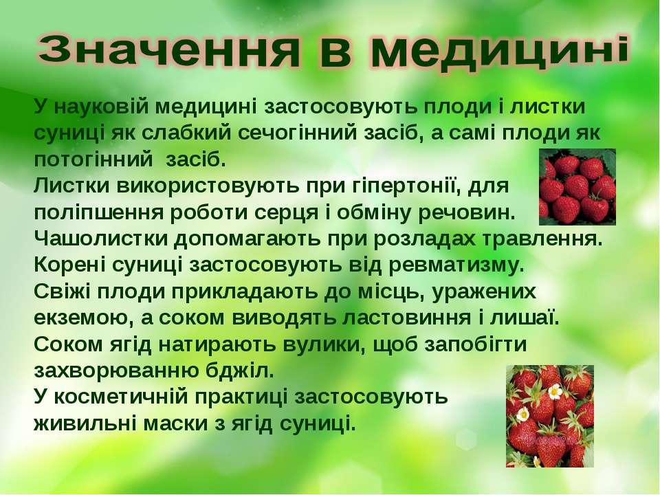 У науковій медицині застосовують плоди і листки суниці як слабкий сечогінний ...