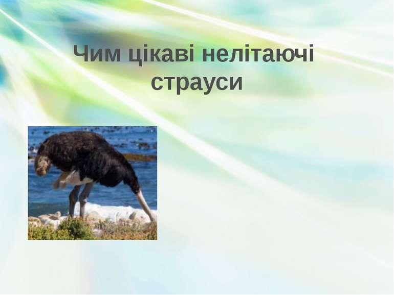 Чим цікаві нелітаючі страуси