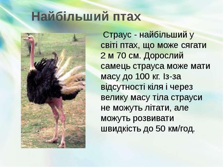 Найбільший птах Страус - найбільший у світі птах, що може сягати 2 м 70 см. Д...
