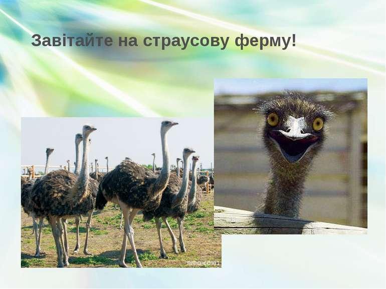 Завітайте на страусову ферму!