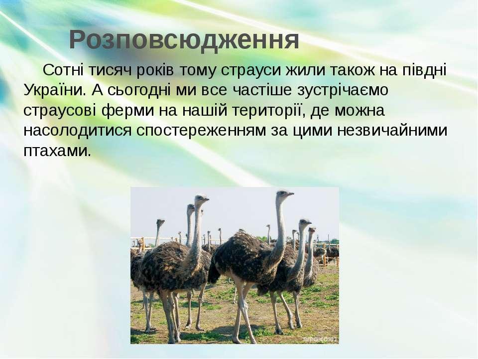 Розповсюдження Сотні тисяч років тому страуси жили також на півдні України. А...