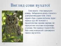 Вигляд сови вухатої Сова вухата - птах середнього розміру. Забарвлення досить...