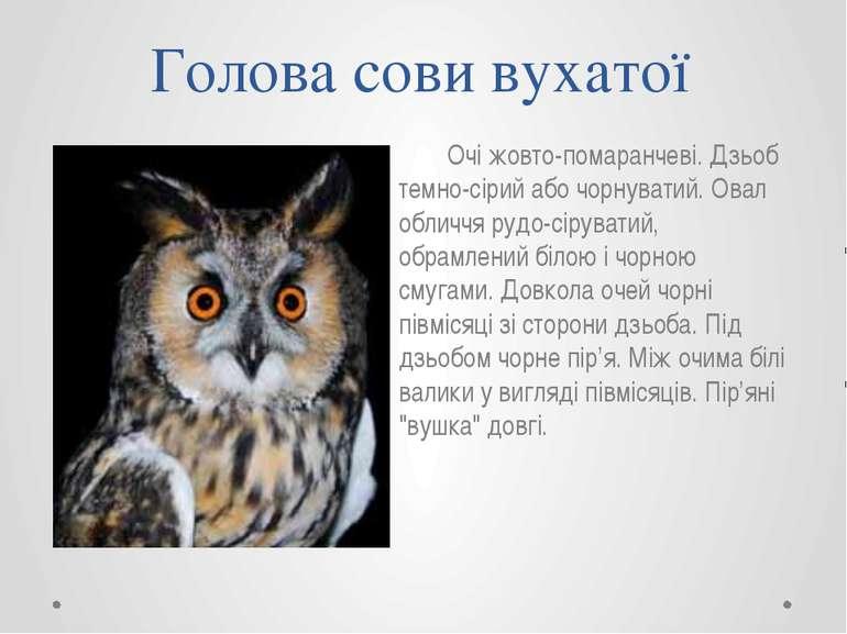 Голова сови вухатої Очі жовто-помаранчеві. Дзьоб темно-сірий або чорнуватий. ...