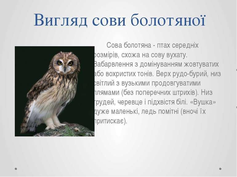 Вигляд сови болотяної Сова болотяна - птах середніх розмірів, схожа на сову в...