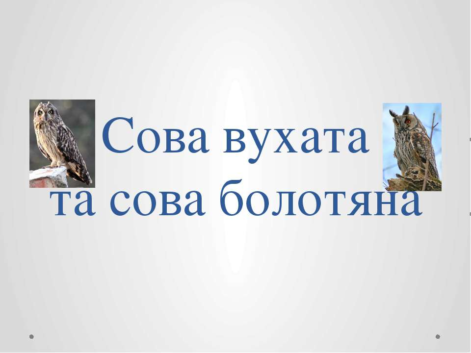 Сова вухата та сова болотяна