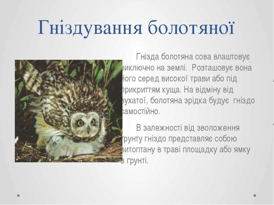 Гніздування болотяної Гнізда болотяна сова влаштовує виключно на землі. Розта...