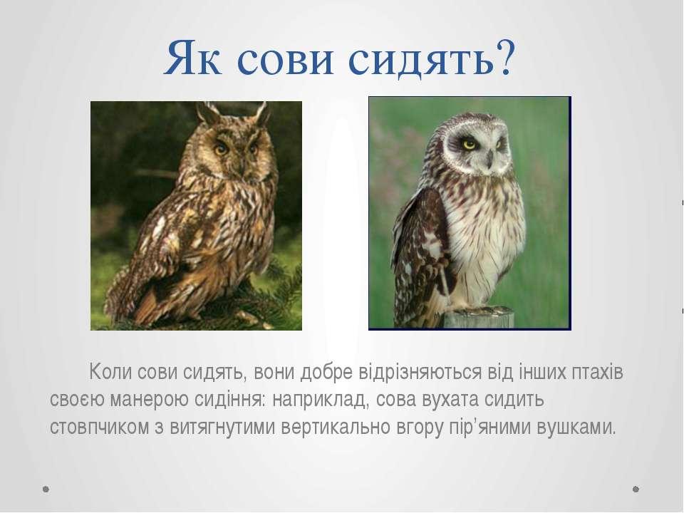 Як сови сидять? Коли сови сидять, вони добре відрізняються від інших птахів с...