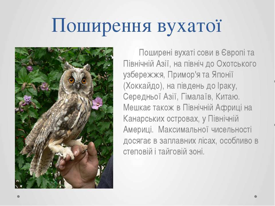 Поширення вухатої Поширені вухаті сови в Європі та Північній Азії, на північ ...