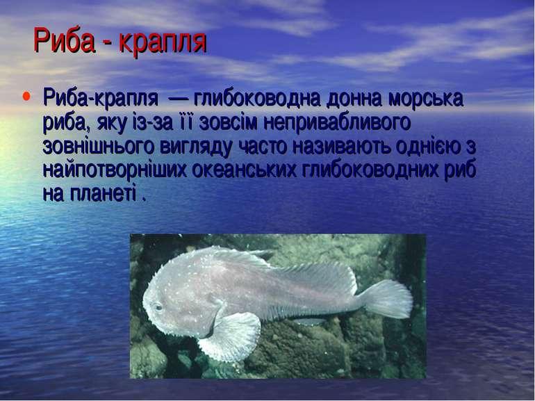 Риба-крапля — глибоководна донна морська риба, яку із-за її зовсім непривабл...