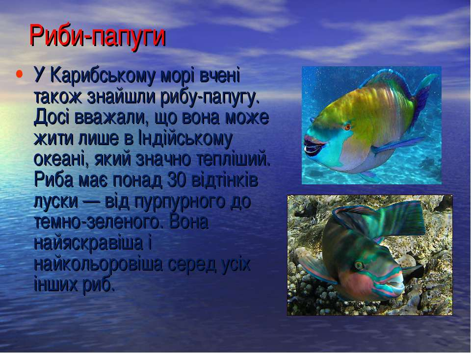 У Карибському морі вчені також знайшли рибу-папугу. Досі вважали, що вона мож...