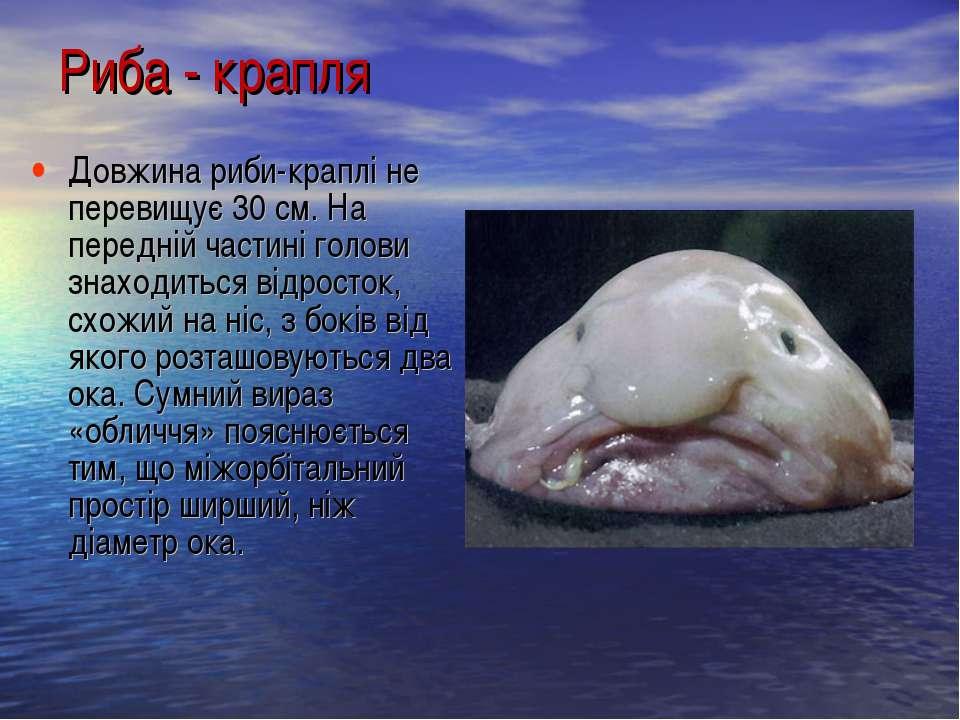 Довжина риби-краплі не перевищує 30 см. На передній частині голови знаходитьс...