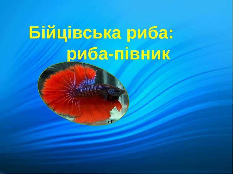 Бійцівська риба: риба-півник