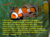 Риби-клоуни – морські види риб з яскраво-оранжевим забарвленням з чорними та ...