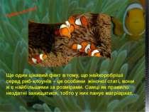 Ще один цікавий факт в тому, що найхоробріші серед риб-клоунів – це особини ж...