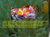 у риб-клоунів немає природного імунітету до опіків жалкими клітинами актиній....