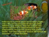 Риби-клоуни протягом всього життя живуть парою, і тому у більшості видів зазв...