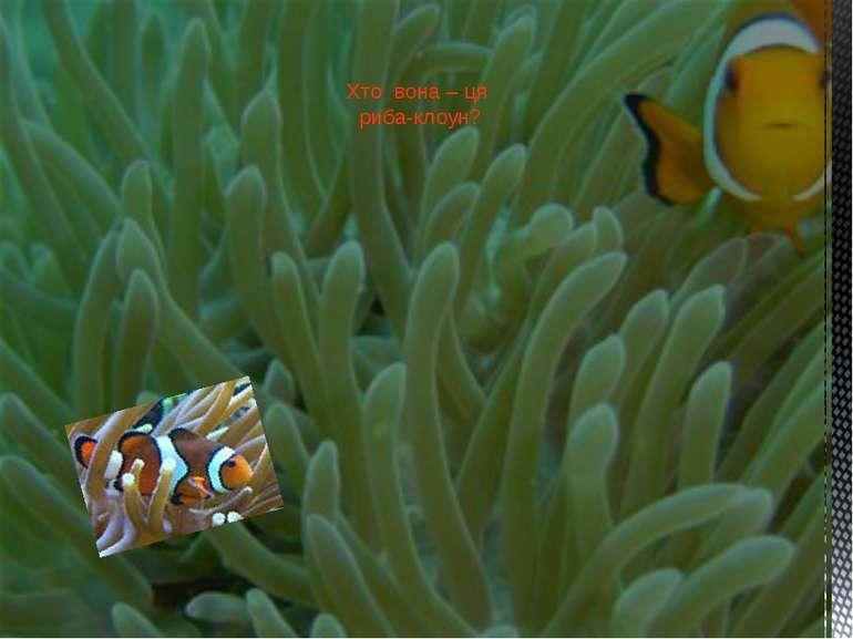 Хто вона – ця риба-клоун?