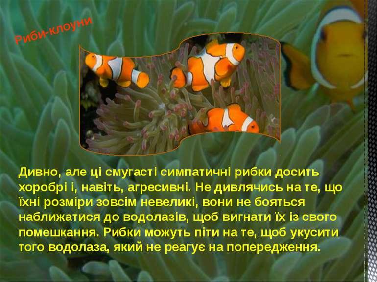Дивно, але ці смугасті симпатичні рибки досить хоробрі і, навіть, агресивні. ...