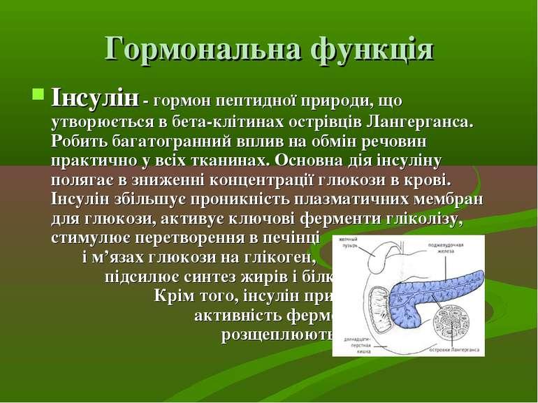 Гормональна функція Інсулін - гормон пептидної природи, що утворюється в бета...