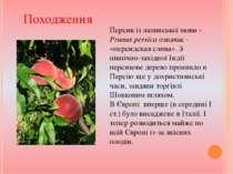 Персик із латинської мови - Prunus persica означає - «персидская слива». З пі...