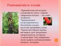 Різноманітність плодів Червоний колір листя персик успадкував від аличі, а че...