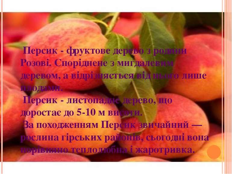 Персик - фруктове дерево з родини Розові. Споріднене з мигдалевим деревом, а ...