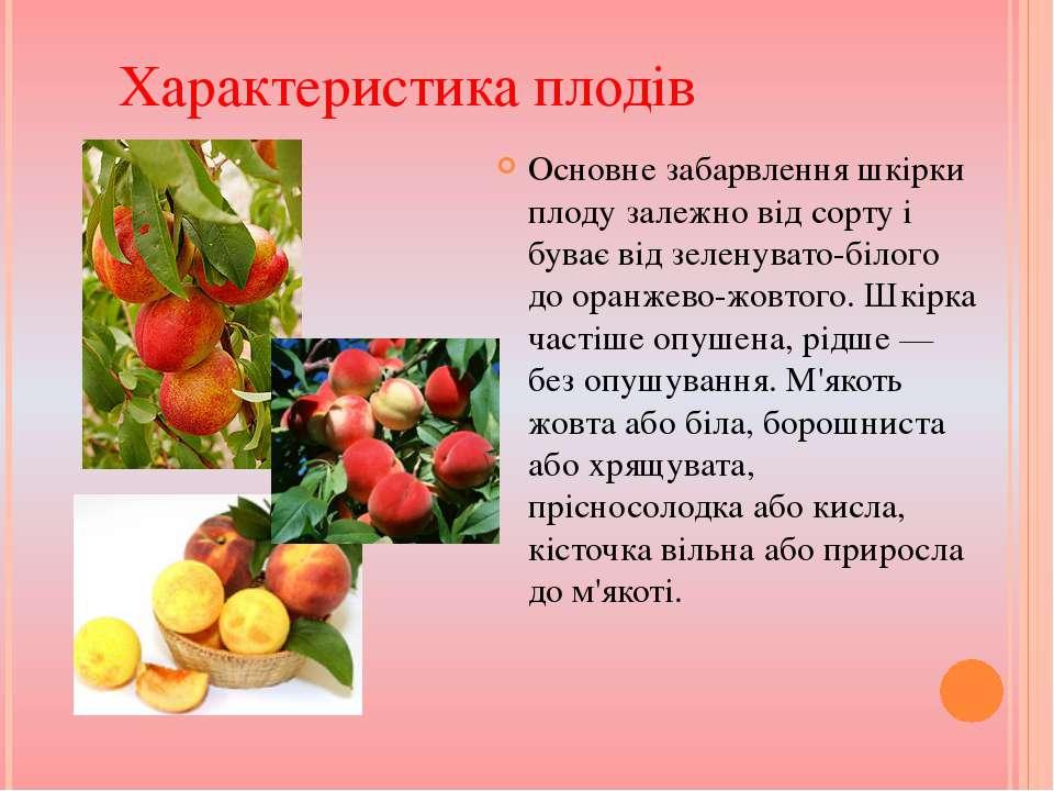 Основне забарвлення шкірки плоду залежно від сорту і буває від зеленувато-біл...