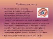 Лімбічна система - це центр емоційної чутливості сприйняття зовнішнього серед...