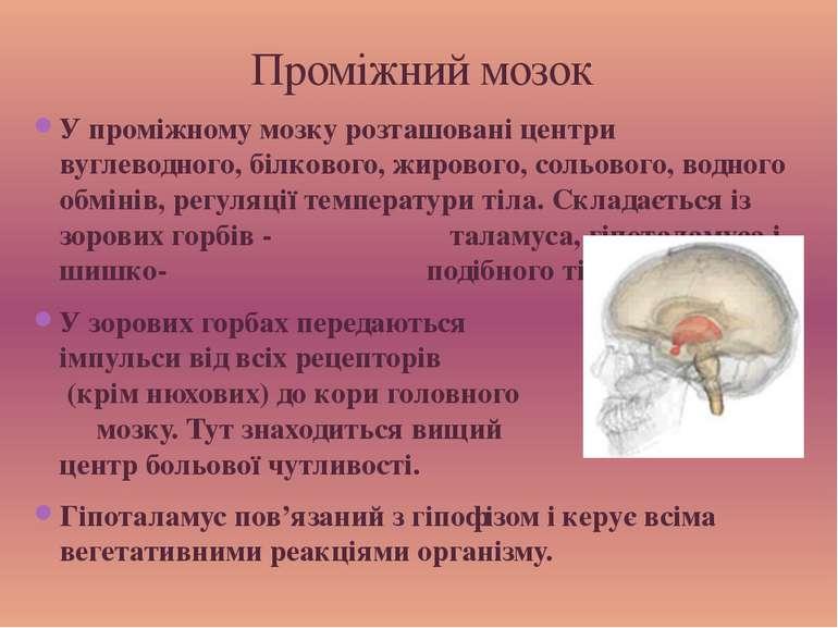 У проміжному мозку розташовані центри вуглеводного, білкового, жирового, соль...