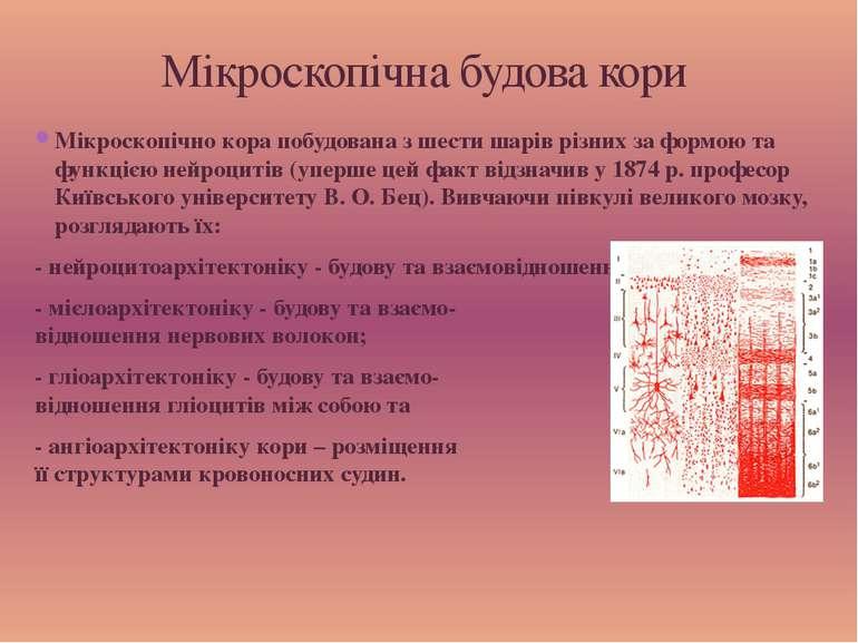 Мікроскопічно кора побудована з шести шарів різних за формою та функцією нейр...