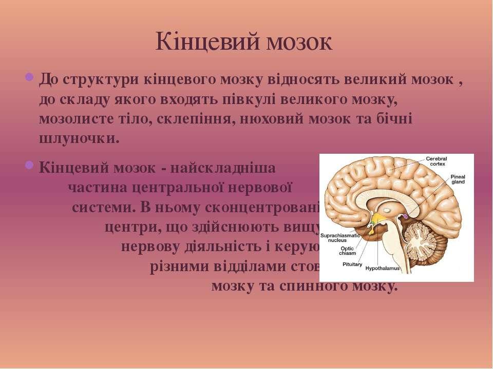 До структури кінцевого мозку відносять великий мозок , до складу якого входят...