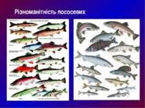 Різноманітність лососевих