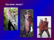 Ось вони, лососі !