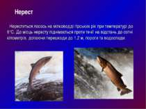 Нереститься лосось на мілководді гірських рік при температурі до 6°C. До місц...